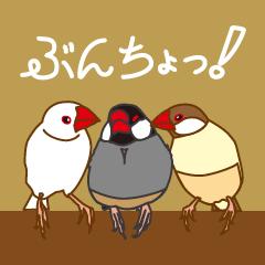 Daily Java sparrow!