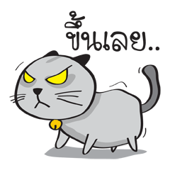 Grayscale Cat