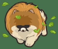 Hi! Pomeranian sticker #9929613
