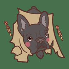 French bulldog  Chinese  Sticker sticker #9936977