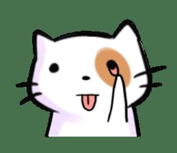 Cookie the Cutest Cat sticker #9944948