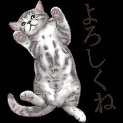 Strange pose cat[ASH]