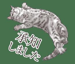 Strange pose cat[ASH] sticker #9952819