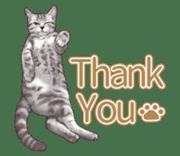 Strange pose cat[ASH] sticker #9952820