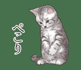 Strange pose cat[ASH] sticker #9952821