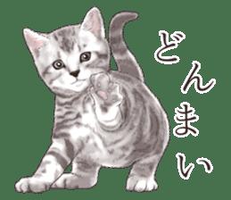 Strange pose cat[ASH] sticker #9952826