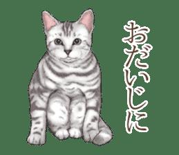 Strange pose cat[ASH] sticker #9952831