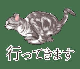Strange pose cat[ASH] sticker #9952836
