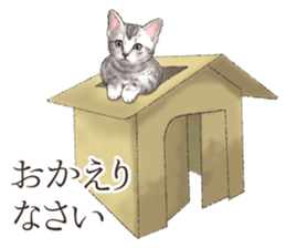 Strange pose cat[ASH] sticker #9952839