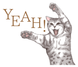 Strange pose cat[ASH] sticker #9952843