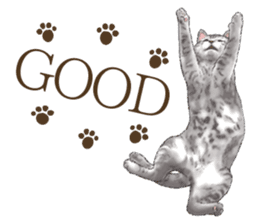 Strange pose cat[ASH] sticker #9952846