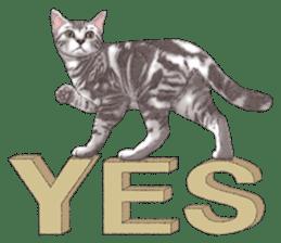 Strange pose cat[ASH] sticker #9952847