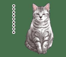 Strange pose cat[ASH] sticker #9952848