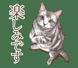 Strange pose cat[ASH] sticker #9952853