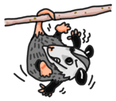 Death Manet skillful Opossum. sticker #10053891