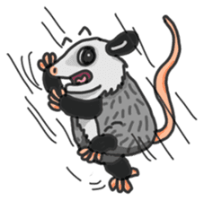 Death Manet skillful Opossum. sticker #10053910