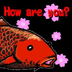 Nishikigoi in English(Colored carp)