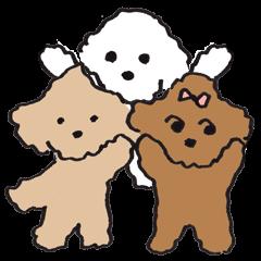 happy toy poodle life
