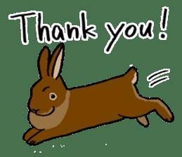 English Bunny 2 sticker #10103554