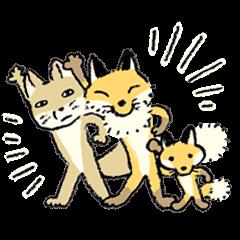 three foxes!