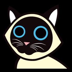 Kapi the Siamese cat