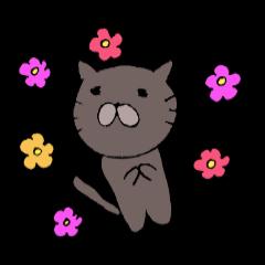 Black cat NYAN 2