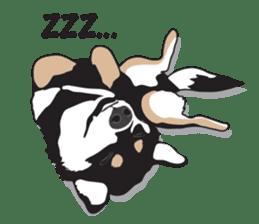Black Shiba Inu Akira sticker #10411474