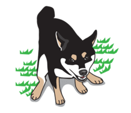 Black Shiba Inu Akira sticker #10411493