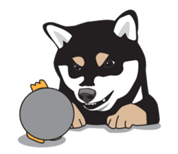Black Shiba Inu Akira sticker #10411500