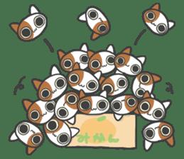 ORANGE BOX CAT sticker #10419114