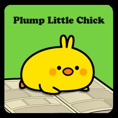 Plump Little Chick