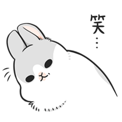 Machiko rabbit 3
