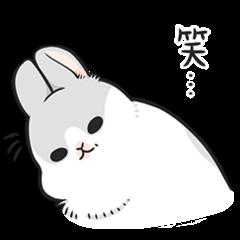 Machiko rabbit 3