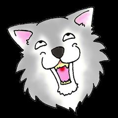 mr.wolf4 Gray
