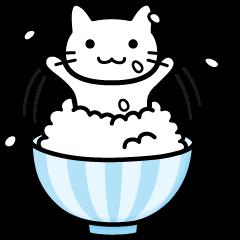 Rice Rice cat