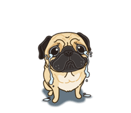A sticker willingly. Pug (English) sticker #10646579