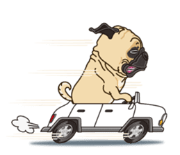 A sticker willingly. Pug (English) sticker #10646591