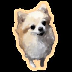 Komaru of a Chihuahua