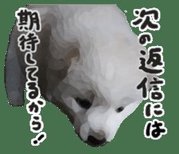 Sticker Shibainu(vol4) sticker #10750861