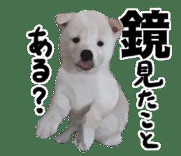 Sticker Shibainu(vol4) sticker #10750868