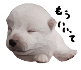 Sticker Shibainu(vol4) sticker #10750871