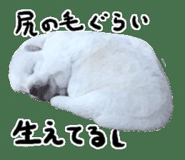 Sticker Shibainu(vol4) sticker #10750873