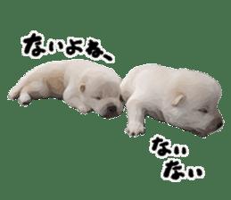 Sticker Shibainu(vol4) sticker #10750875