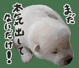 Sticker Shibainu(vol4) sticker #10750876