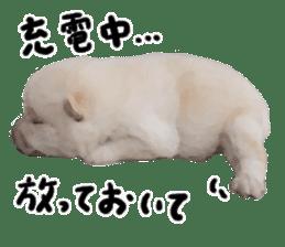 Sticker Shibainu(vol4) sticker #10750886