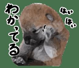 Sticker Shibainu(vol4) sticker #10750888