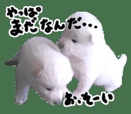 Sticker Shibainu(vol4) sticker #10750891