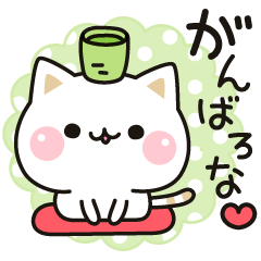 Cat to concern(Kansai dialect ver.)