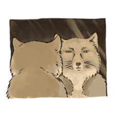 Tibetan Sand Fox of a straight face sticker #10883972
