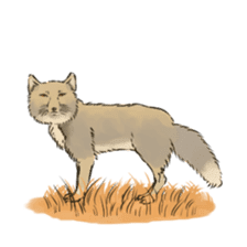 Tibetan Sand Fox of a straight face sticker #10883992